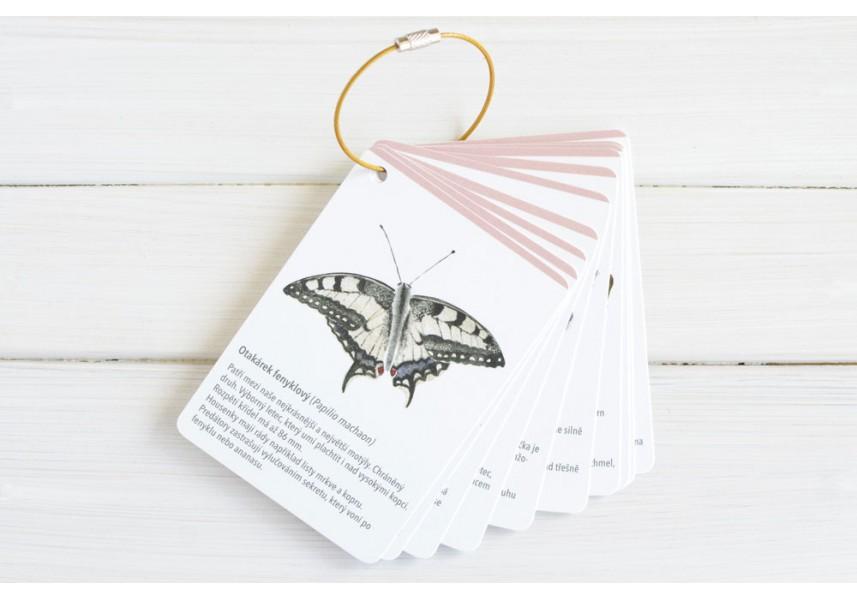 Poznávací kartičky do přírody MOTÝLI