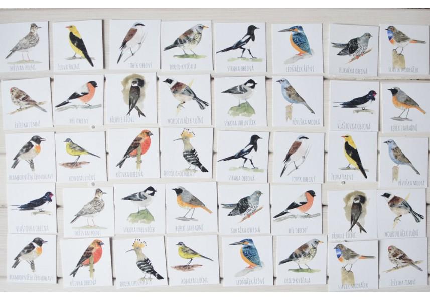 Pexeso Naši ptáčci